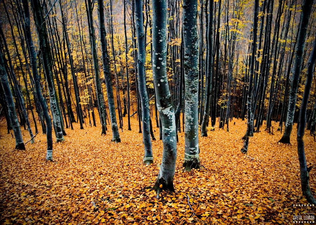 podobovec, Ukraine